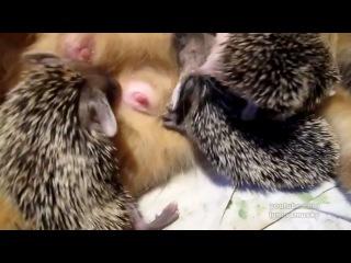 Котоежики